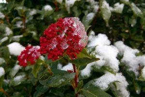 Listopad w ogrodzie – jak przygotować ogród do zimy