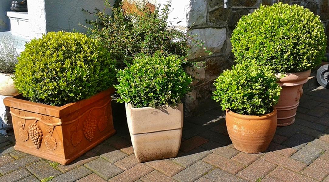 Jakie rośliny zimozielone do ogrodu wybrać?
