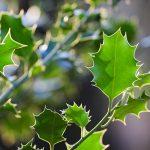 Rośliny zimozielone w ogrodzie