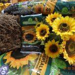 Zielona Oaza na Targach Gardenia 2014