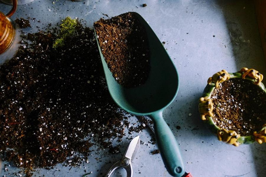 Dobra ziemia do roślin domowych