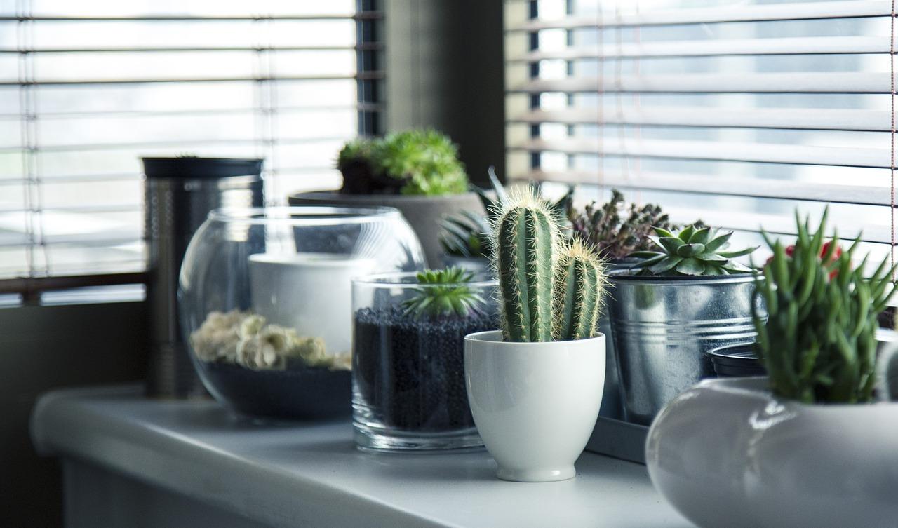 Jaką ziemię lubią kaktusy
