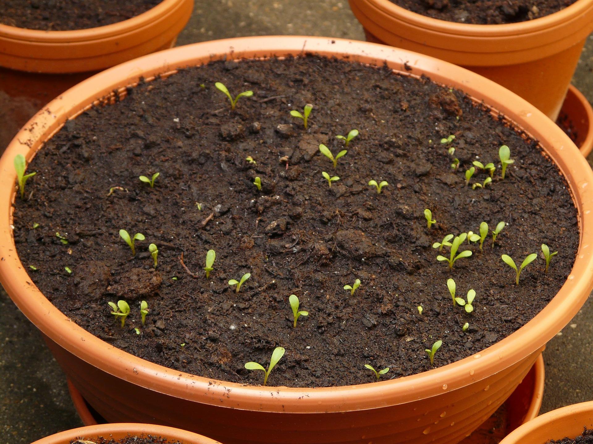 Podłoże do wysiewu nasion Zielona Oaza producent