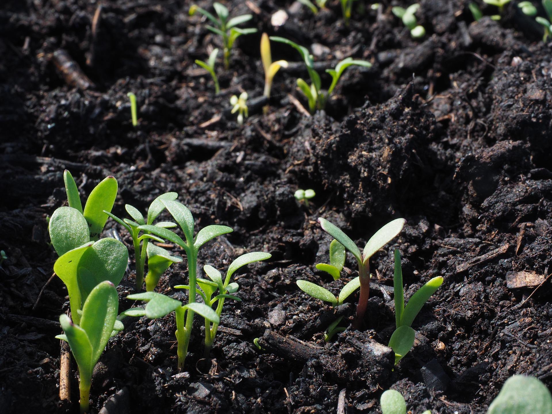 Dobra Ziemia do wysiewu i pikowania Zielona Oaza