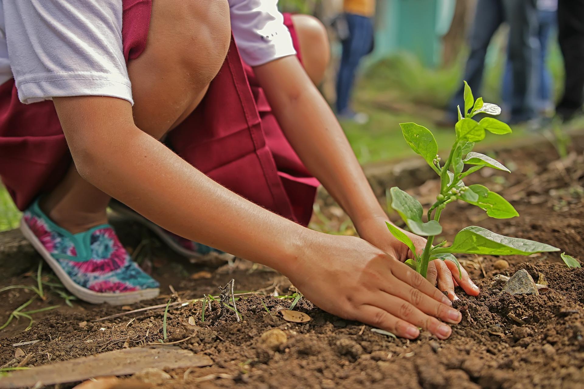 ziemia-uniwersalna-do-kwiatow-producent