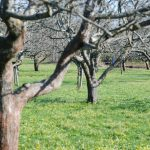 Już czas na wiosenne opryski