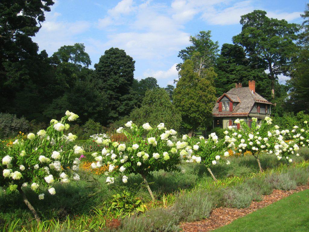 Kora sosnowa w ogrodzie