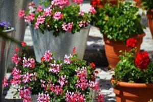 Jak zadbać o rośliny latem – urlopowe SOS
