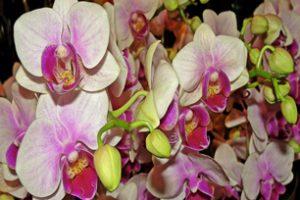 Storczyki – najpiękniejsze kwiaty w naszych domach