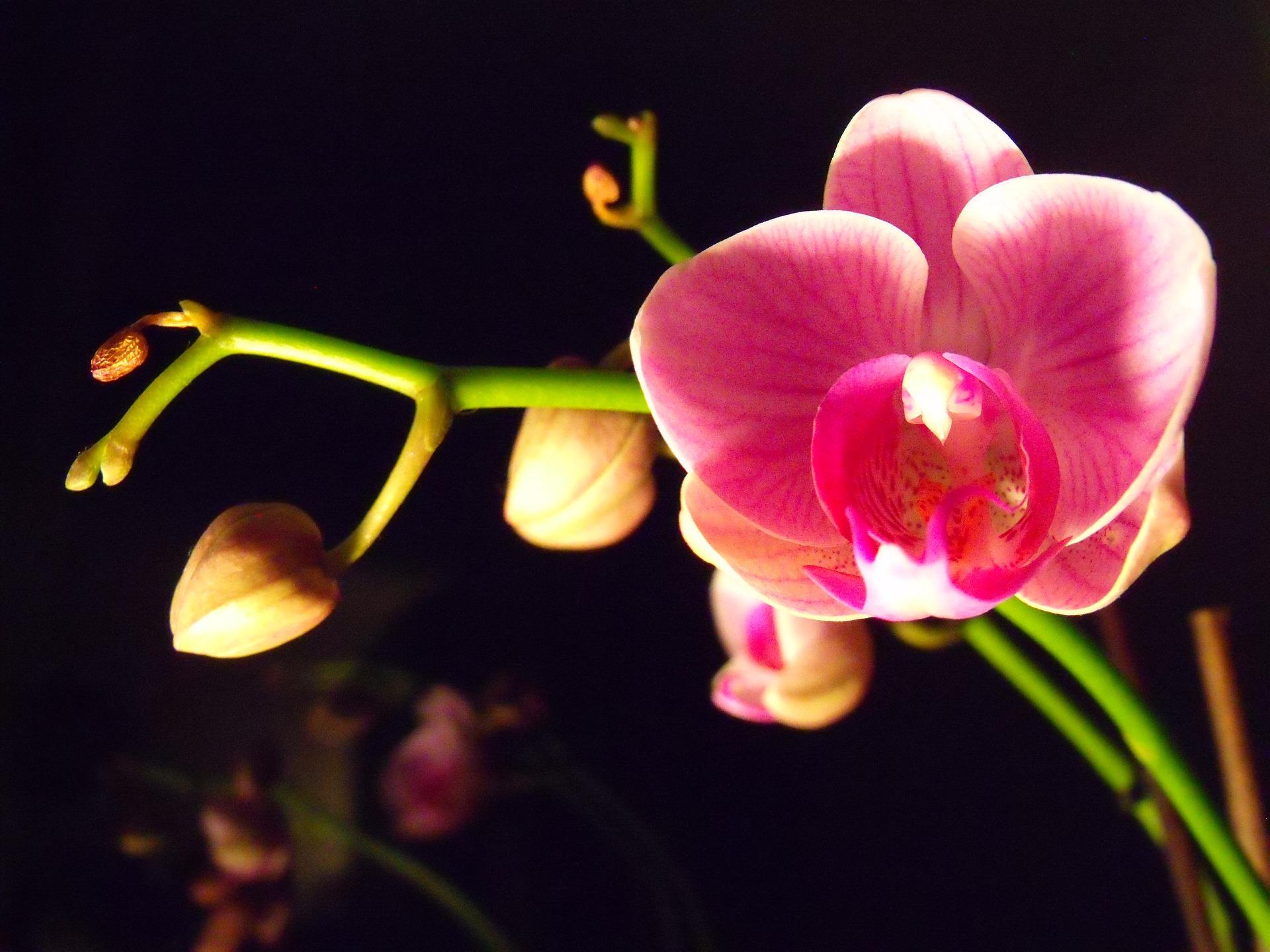 Dobre podłoże do storczyków to podstawa bujnego kwitnienia