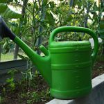 Lato w ogrodzie – jak chronić rośliny przed upałami?