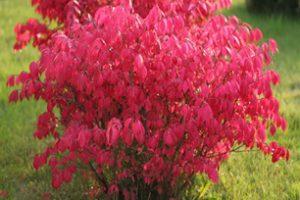 Płomienny, wyjątkowy ogród jesienny